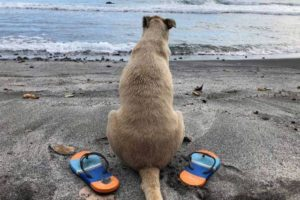balenbouche dog at st lucia black sand beach