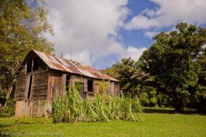 balenbouche caribbean plantations barn