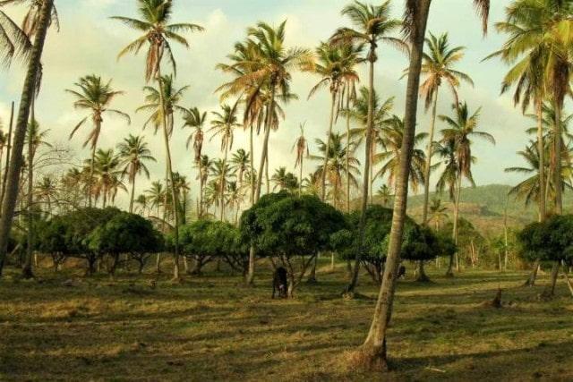 balenbouche coconut grove